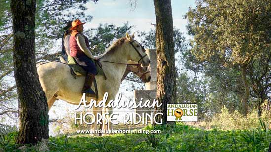 rent a andalusian horse