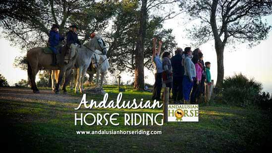 yoga biodanza andalusian horse