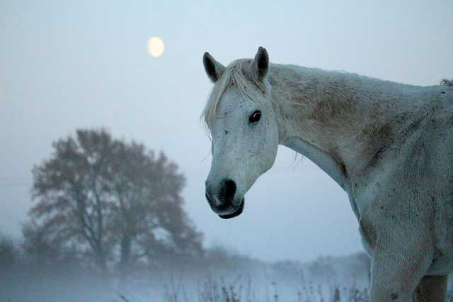 full-moon-horse-rides