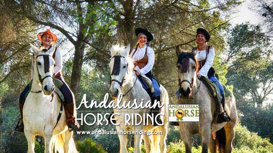 andalusian horse culture